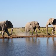 Kwando Nxai Pan Camp - where to stay for pilots in Botswana , Bild 10/26