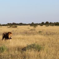 Kwando Nxai Pan Camp - where to stay for pilots in Botswana , Bild 7/26